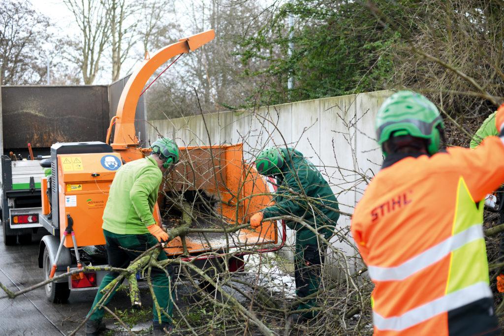 Drei GUW-Mitarbeiter mit Schutzhelmen und Arbeitskleidung schreddern einen großen Baum in einer gelben Maschine.