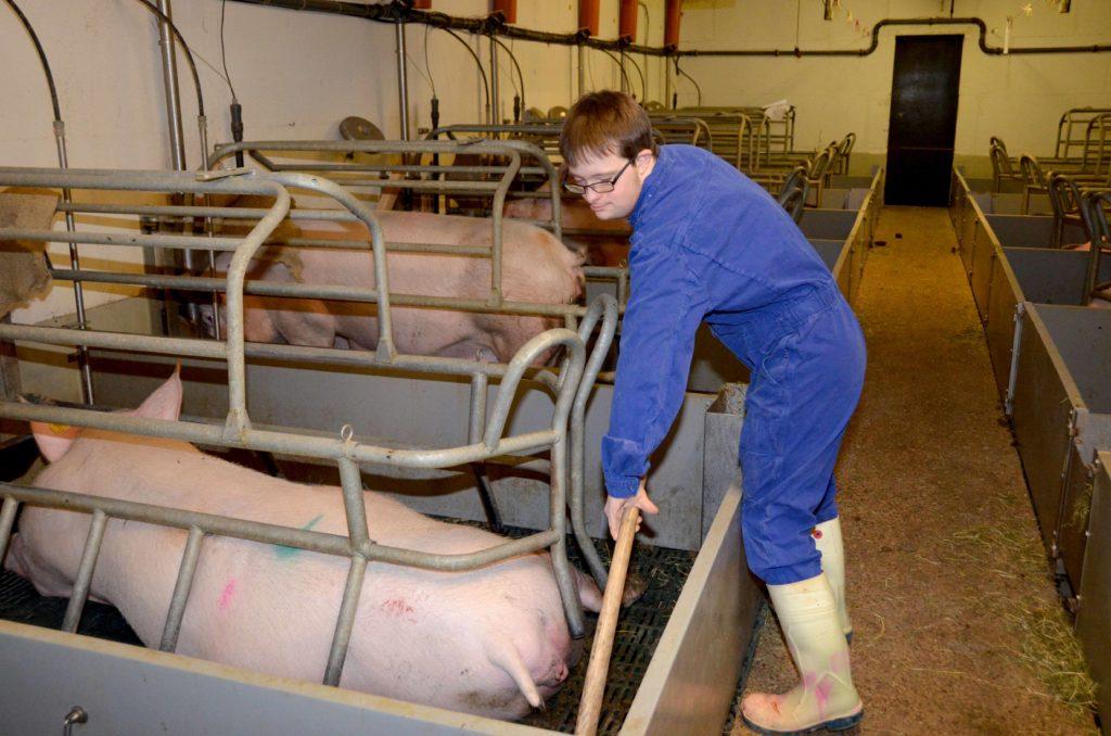 Tobias Koddebusch mistet gerade in seiner Arbeitskleidung den Schweine-Stall aus.